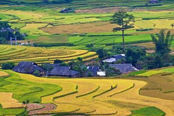 Terraced rice fields in Vietnam