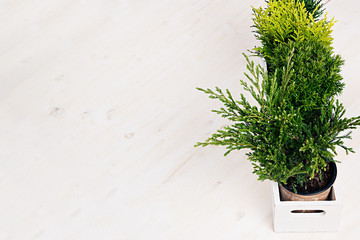 Home soft decor with young green plants in white box on beige wood table.