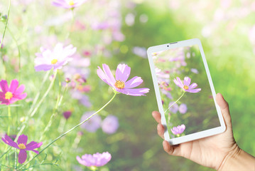 phone flowers nature technology background wallpaper