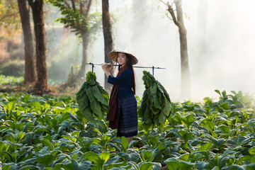 Woman farmer harvesting tobacco at countryside.