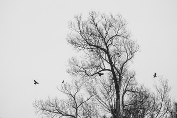 Tree silhouette without leaves in autumn birds flying near