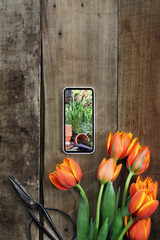 Gardening Photo and Tulips