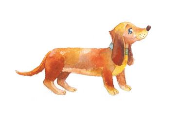 Dachshund watercolor