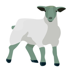 Little white mountain sheep.Scottish fold sheep.Scotland single icon in cartoon style vector symbol stock illustration.