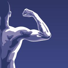 Muscle - Biceps - Musculature - Musclé - Sport
