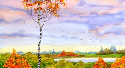 Autumn birch scene