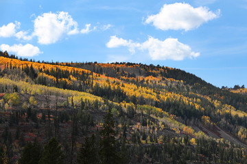 Fototapete - Mountainside with Fall Colors