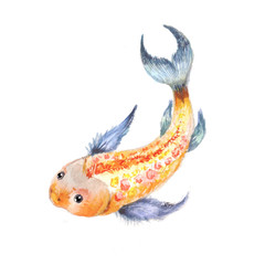 Koi watercolor. Gold fish isolated. Ying Yang symbol.