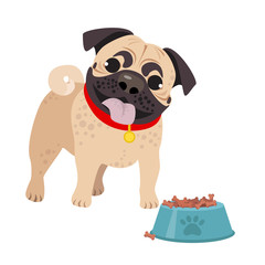 Cute domestic dog Pug breed on the white background. Vector illustration