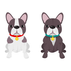 Domestic dog French Bulldog breed on the white background. Vector illustration
