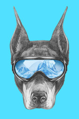 Portrait of Doberman Pinscher with ski goggles. Hand drawn illustration.