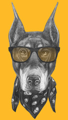 Portrait of Doberman Pinscher with sunglasses and scarf. Hand drawn illustration.