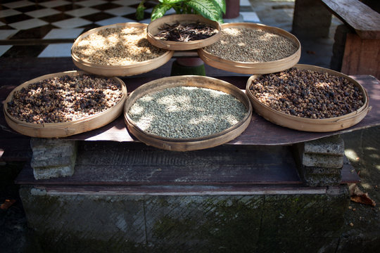 Luwak coffee as made and sold in Bali, Indonesia