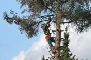Klettergurt Für Baumfällarbeiten : Bilder und videos suchen: motorsäge
