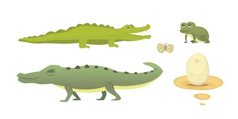 Cute Crocodile set. Aligator vector cartoon illustration