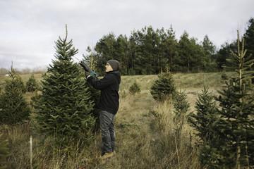 Man choosing tree in Christmas tree farm, Cobourg, Ontario, Canada