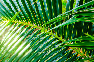 Palm branch background