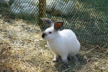 Rabbit in the paddock