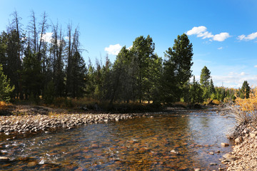 Fototapete - Peaceful Mountain River in Ashley National Park
