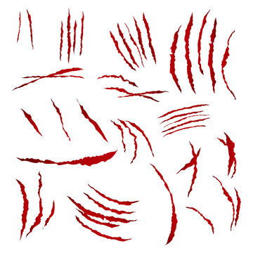 Claws Scratches Vector. Isolated On White Background. Bear Or Tiger Paw Claw Scratch Bloody. Shredded Paper