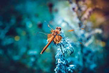 Beautiful picture with a dragonfly