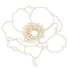 Golden hand drawn poppy, anemone flowers. Vector.