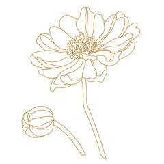 Golden illustration of chamomile/daisy flower isolated on white background. Vector.