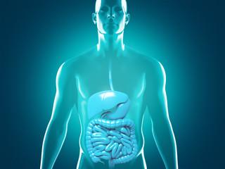 Uomo con organi sani 3d