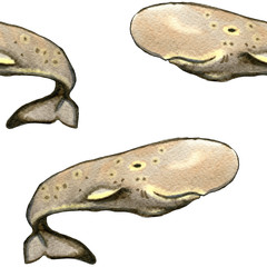 Seamless hand drawn pattern with sperm whales