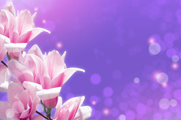 Magnolia flowers on glowing abstract background
