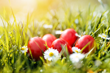 Red Easter Eggs in green grass arranged with daises
