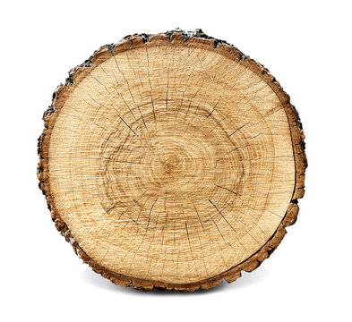 Large circular piece of wood cross section with tree ring texture pattern and cracks isolated on white background. Rough organic edges of bark.