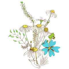 Vector. A bouquet of wild flowers and herbs, chamomile, peas. Background image.