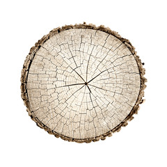 Wooden stump isolated on the white background. Round cut down tree with annual rings as a wood texture. Cross section of large tree.