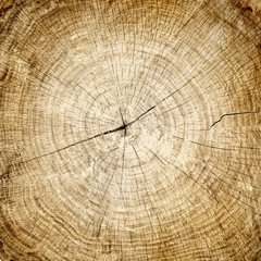wood background with grain texture cracks and rings. Large cut tree trunk at the stump