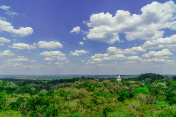 panoram of Maya pyramid in the rain forest of Tikal in Guatemala