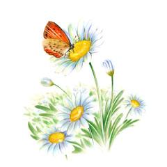 白い花と蝶