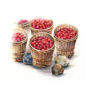 梅干しの木樽