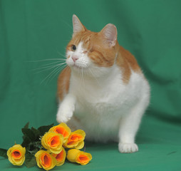 Red-white one-eyed cat with yellow roses on a green background