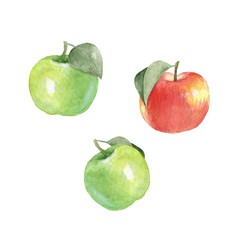 Watercolor apples, isolated on white background. Hand drawn elements for design