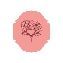 Beautiful flower ornament icon vector illustration graphic design