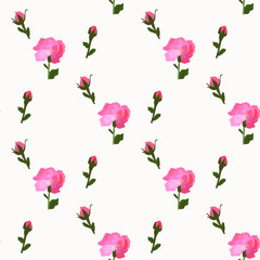 Flower peony pink blooms on seamless white wallpaper