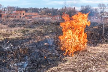 dry grass fire