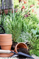Old gardening trowel with terracotta pots, potting soil, and potted herbs with spilled soil.