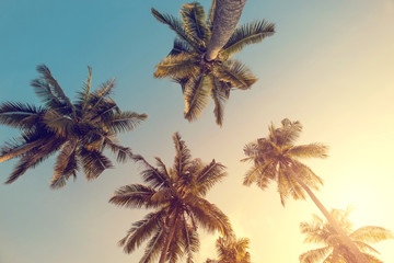 summer time, Coconut palm tree over sky and sunlight background, Vintage toned