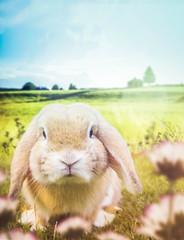 Osterkarte mit Hase auf der sommerlichen Wiese
