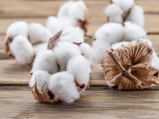 Fluffy cotton ball of cotton plant on the wooden table.