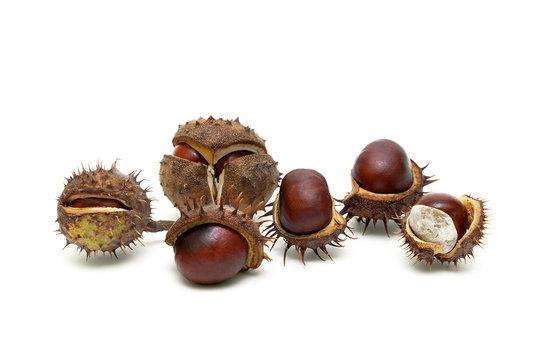 Ripe chestnut fruit isolated on white background.