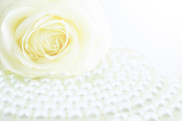White rose and pearls in drops of water macro with soft focus on white background. Elegant gentle airy artistic template for congratulations.