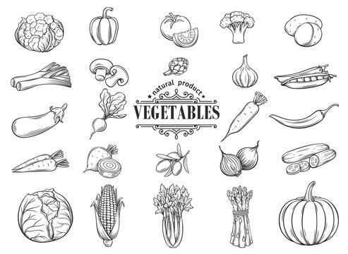 Vector hand drawn vegetables icons set. Decorative
